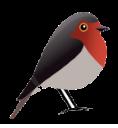 Robin GmbH - Webdesign und SEO